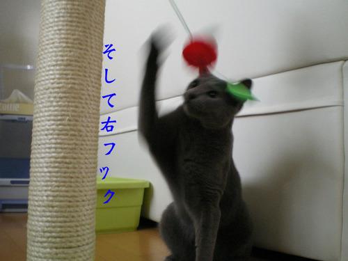 IMGP2476b のコピー.jpg